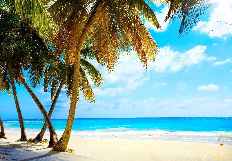 картинки на рабочий стол море пляж пальмы № 258652 без смс