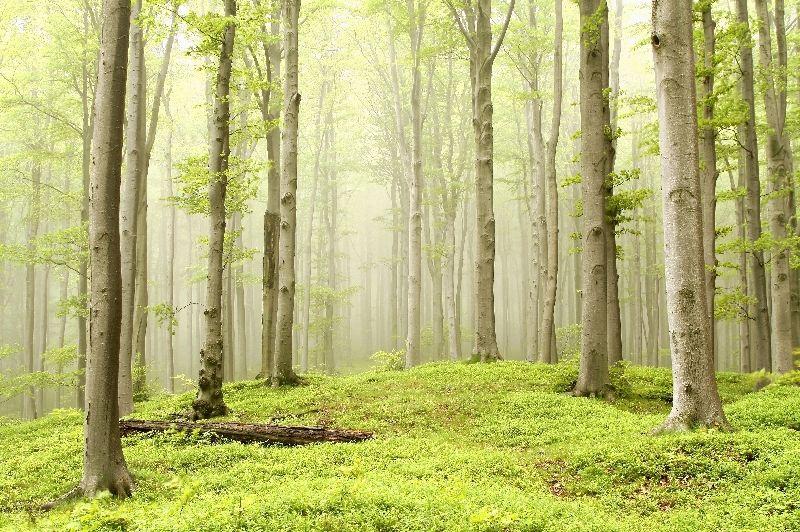 обои на рабочий стол лес природа № 517809 бесплатно